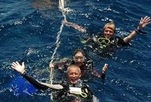 Thailand duik safaris / Op zoek naar een duik vakantie in Thailand. Similan Duik Centrum biedt duik dagtrips en duik safaris naar de Similan eilanden Koh Bon, Koo Tachai, lokale wrakken en Richelieu rock