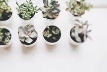 Green plants, garden