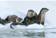 OTTERS / by margaret williamson