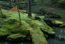 Moss / by Chris O'Grady