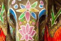 Elephant | Beauty