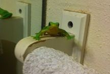 Frog On A Shelf / You have seen the Elf on a Shelf, well now here is a Frog on a shelf for you.