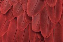 Texture & Colors / texture