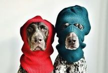 Dogs.. and some of them wearing hats / Squirrel!!