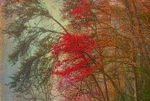 The beauty of trees...Life! / Trees / by Donna McMahon