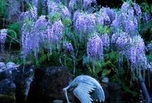 In my secret Garden....beauty / Gardens / by Donna McMahon