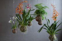 Garden ideas / Trellis and garden beds