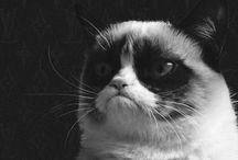 Grumpy cat / Alias Tardar Sauce:)