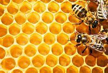 Bee Things