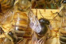 Buzzzzzz bees / Bees and things about bees / by Donna McMahon