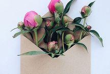 Poppies/Hollyhocks klaprozen/stokrozen