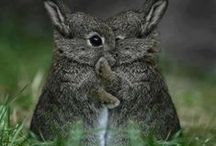 "BUNNY BUN BUNS / ""Rabbit underground, rabbit safe and sound.""  ― Richard Adams, Watership Down  / by Susan Ward"