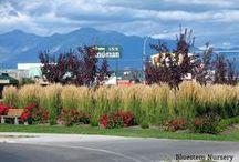 Grasses in the Landscape