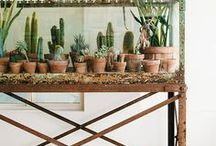 Garden - My cactus