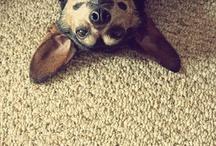 Vita da Cani / Best Friends Forever