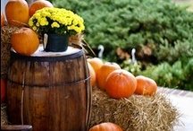 Halloween & Thanksgiving / decorations, specialty foods / by Becky Saylor