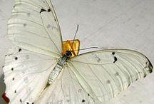 Schmetterlinge / by Sevinc Gürses