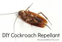 DIY Pest Control / Some important Do it Yourself pest control tips for you. Live bug-free!