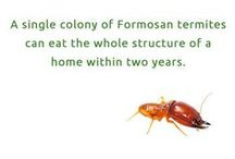 Pest Facts / Interesting facts about pests you probably don't know.