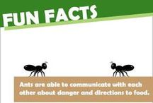 Fun Pest Facts / Some crazy and weird facts about pests. Enjoy