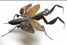 Insect Art / Check out the art and creative images made with insects!