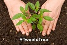 Tweet a Tree !! / Tweet on twitter and Ecoshield will plant a tree for each of your tweets .... !!