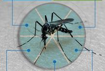 Mosquitoes !! / The blood drinking insects .