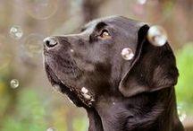 Hondenfotografie / Afbeeldingen van honden
