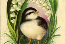 Vintage Illustrations   Birds