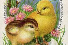 Vintage Illustrations   Easter chicks