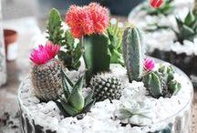 Garden and Plant / Garden inspiration