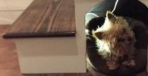 [ inspiration ] tiny living with pets / Make your tiny home pet friendly too!