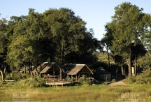 Duba Plains Camp / Duba Plains Camp, located in the northern reaches of Botswana's famed Okavango Delta and just north of the Moremi Game Reserve, is a private 77,000-acre reserve. Inaccessible for most of the year by any means other than aircraft, it is this remoteness that solidifies Duba Plains as the soul of 'wild Africa'.  Duba offers just 12 guests an idyllic all-round Okavango experience throughout the year, with vast, seasonally inundated floodplains, which are home to huge herds of buffalo and more.