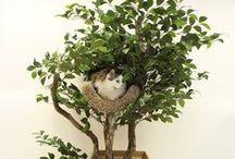 Cat kid ideas / by Jackie Baldock