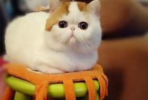 Cute cute cute! / Everything kawai