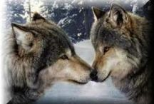 Wolves / by Wanda Dove