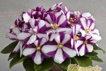 kwiaty-flowers