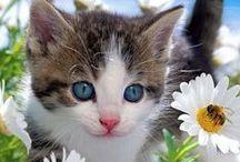 koty-cats