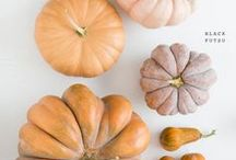 Fall / Everything we love about Fall