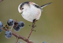 Ocells pájaros