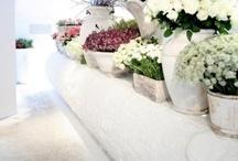 :: flowers & plants ::