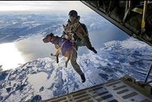Dogs of Courage and Heart / This is why dogs are the best of the best!