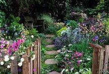 ogród / garden, outdoor, plants
