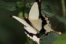 motyle / butterflies and ladybugs