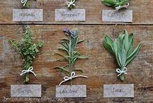 Herbarium ♥