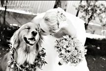All You Need is Love & A Dog / Have your furry friend by your side while you marry your best friend.