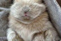zwierzęta domowe / pets, dog, cat, puppy, kitten, bunny,