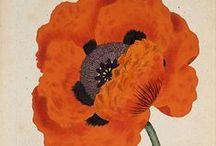botanic.all / movidas pintadas en el vacío