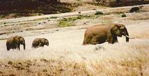 Wildlife / A Noah's arc of wildlife thrives in Namibia