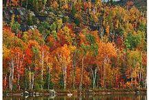 Autumn / by Candy Godwin